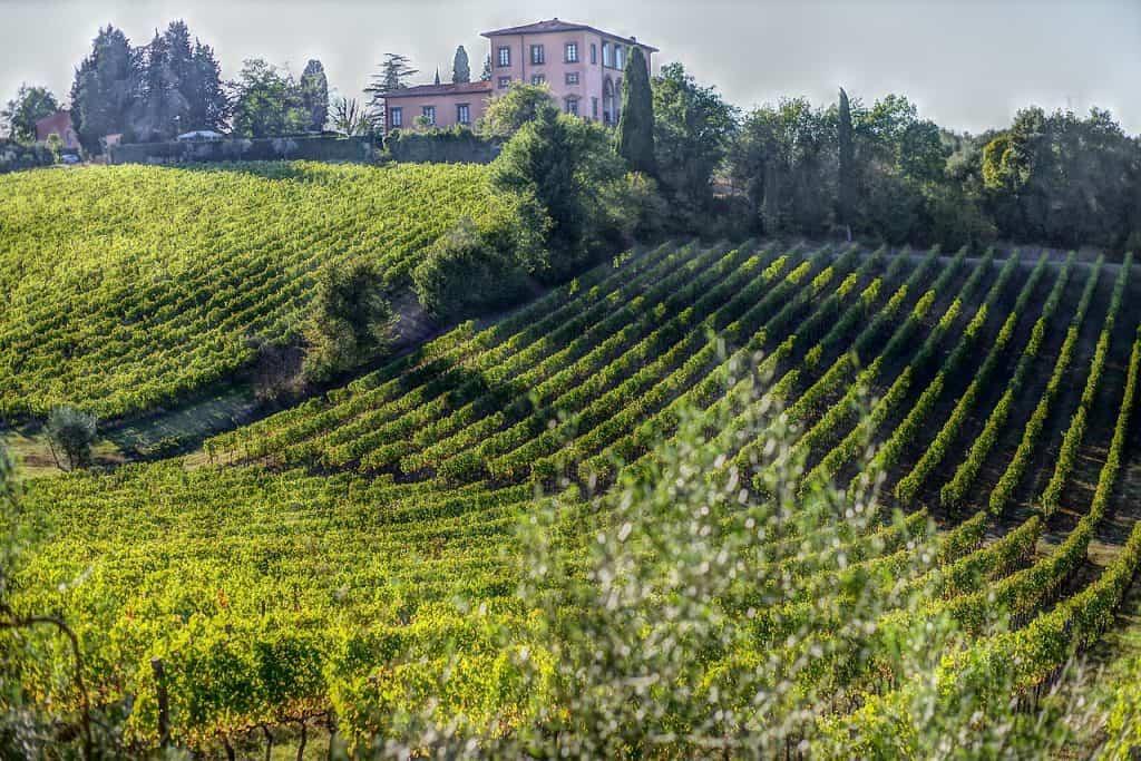 vini-toscani